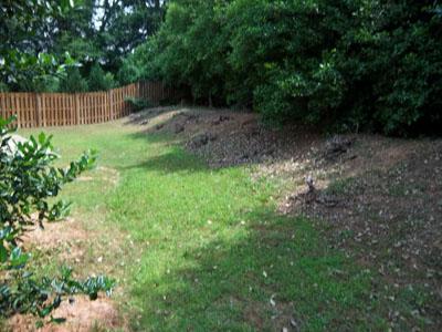 Atlanta Bobcat